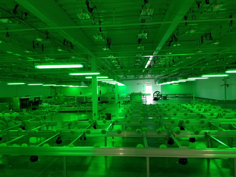 Lighting Grow Room
